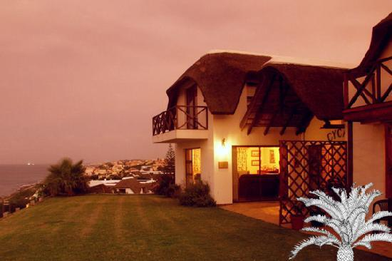 Cycads on Sea Guesthouse : Cycads at night