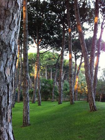 Hotel Beau Rivage Pineta: Pinienhain im Abendlicht