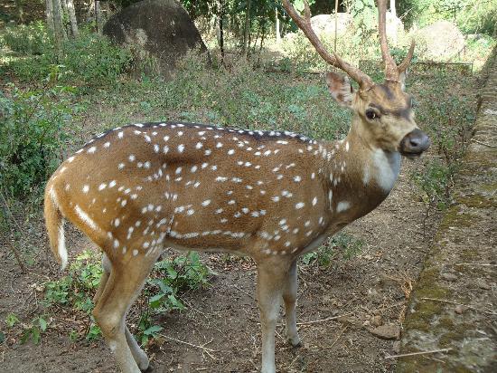 Neyyar Wild Life Sanctuary: Deer Park