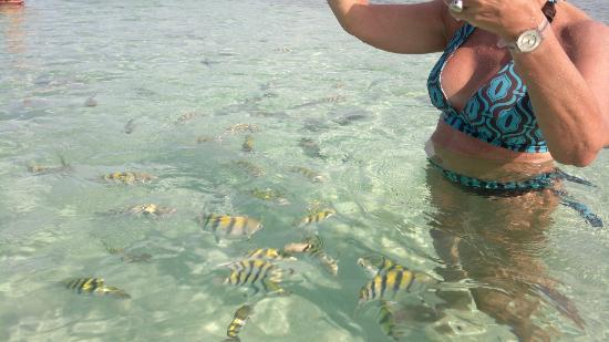 Melia Buenavista: Los peces