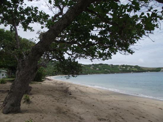 Sugarapple Inn: Friendship Bay looking north(ish)