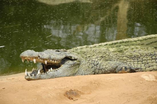 La Ferme aux Crocodiles : croco