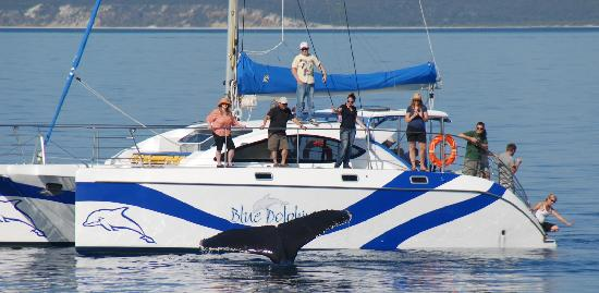 Blue Dolphin Marine Tours: Whale watch in style