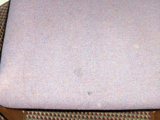 Econo Lodge Inn & Suites Newton : Stains on chair in room