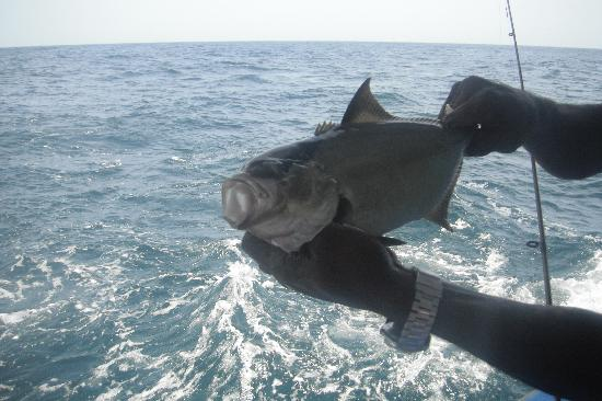 Coco Reef Tobago: Caught on the Captain Bounty