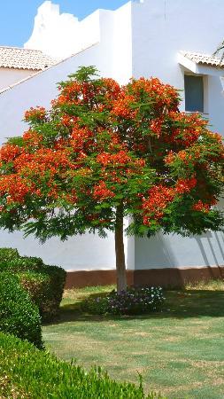 Fantastici giardini fioriti foto di lahami bay resort - Giardini fantastici ...