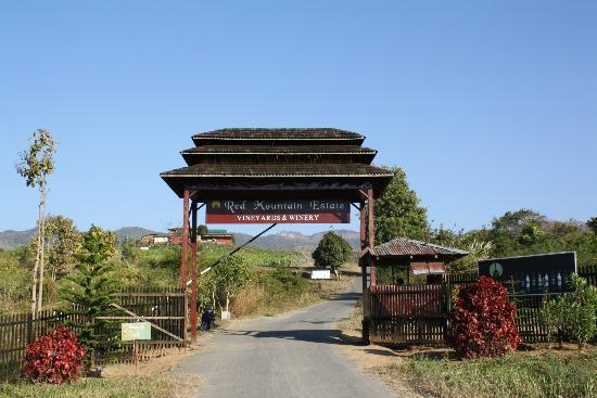 Nyaungshwe, Birmanie (Myanmar) : Red Mountain Estate Vineyards & Winery