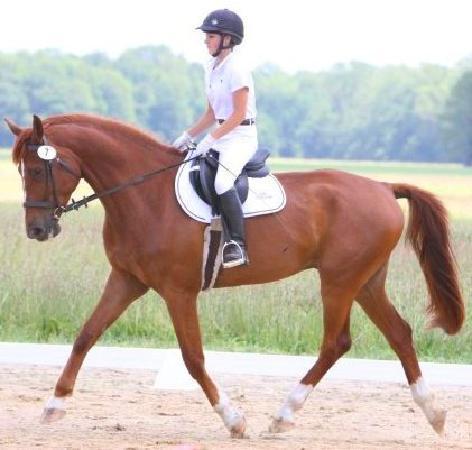 Holly Ridge Farm Equestrian Center: Fischer and Margo