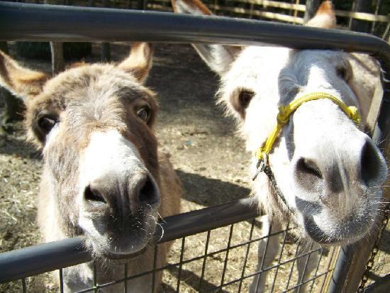 Holly Ridge Farm Equestrian Center: friends