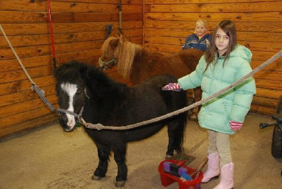 Holly Ridge Farm Equestrian Center: Mini Horses!