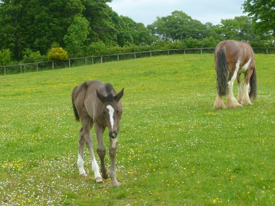 Hundith Hill Hotel: horses in grounds