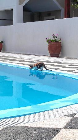 Levante Beach Hotel: lots of cats