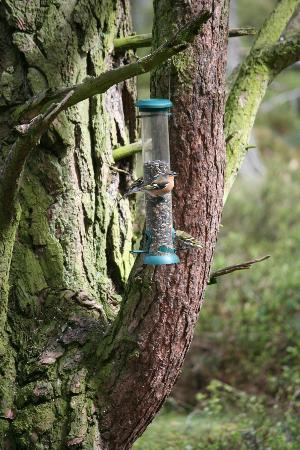 RSPB Loch Garten: Miscellaneous birds at one of the feeders