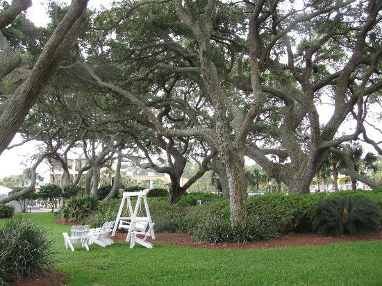 The Beachview Club: Hotel grounds, nice swing to sit on