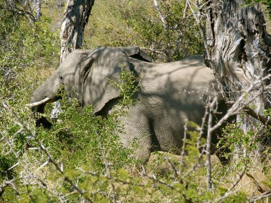 Baobab Ridge: elephant