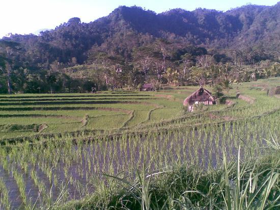 Bali Explore Tours: Padies Terrace when the farmers soiled padi.