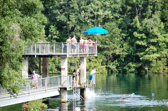 Local Wildlife On The Springs Picture Of Wakulla Springs Lodge Wakulla Springs Tripadvisor