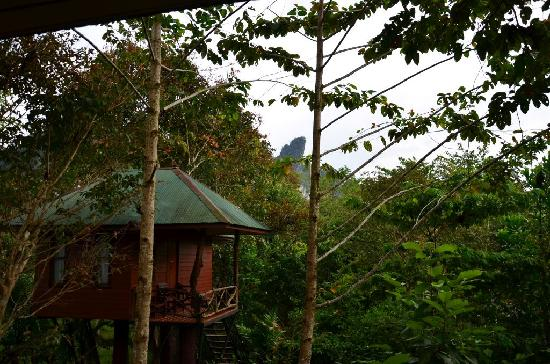 Khao Sok National Park, Thailand: Standard tree house at the Khao Sok Paradise Resort