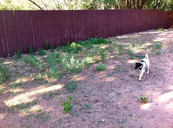 La Quinta Inn Moab: Small Fenced-in Dog Area