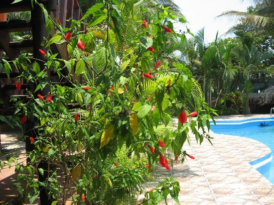 La Delphina Bed and Breakfast, Bar and Grill: beautiful greenery around the pool