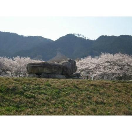 Asuka-mura, اليابان: 日本人はやっぱり桜が好き