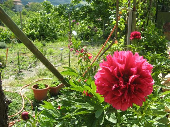Mountain View Bulgaria: Flowers in the garden