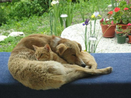 Mountain View Bulgaria: Family dog and cat
