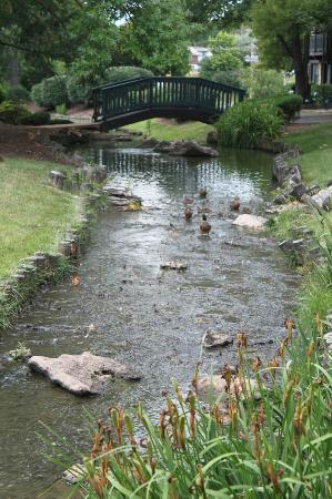 Sheraton Westport Chalet Hotel St. Louis : Creek flowing through property by pool