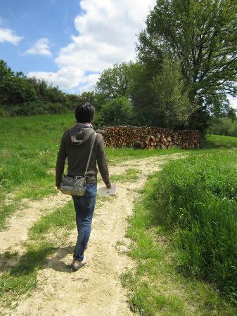 Agriturismo Il Poggio alle Ville: 周辺のトレッキングコースよりの眺め