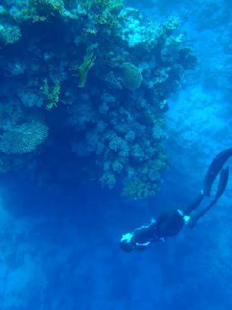 Singapore Freedivers: Freedive Tripadvisor