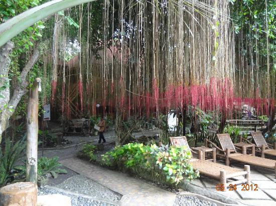 Alona Tropical Beach Resort: hanging plants