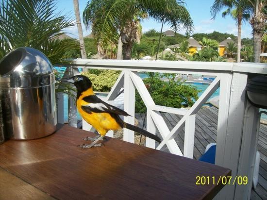 Chogogo Terrace : breakfast at chogogo