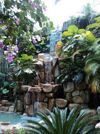 Park Royal Puerto Vallarta: Beau jardin