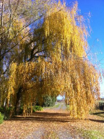 Hawthorne House: Autumn Willow