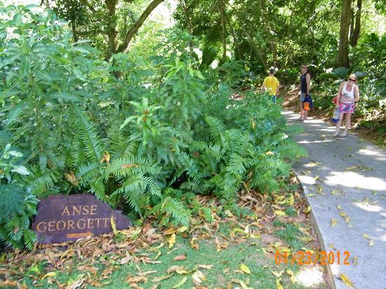 Anse Georgette: La faticosa scalata verso la spiaggia