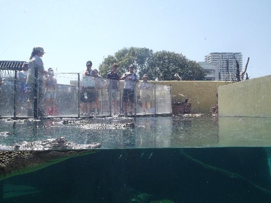 Crocosaurus Cove: fishing for crocs!