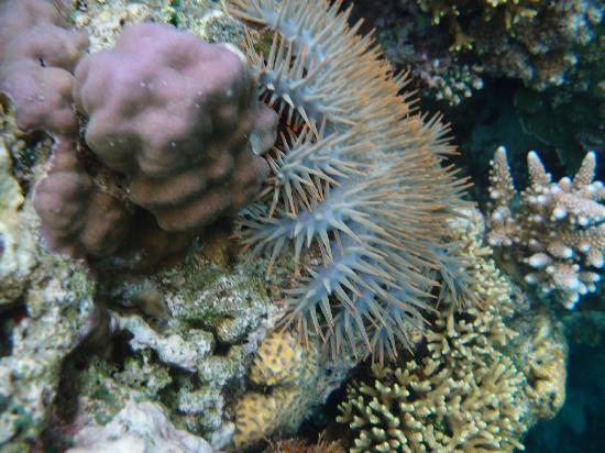 نايا جاوانا ريزورت آند سبا: Underwater 