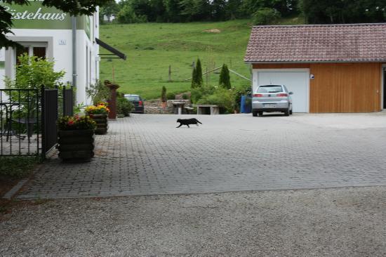 Gasthaus am Rastberg : Driveway