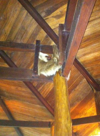 Tree House Lodge: A friendly, albeit sleepy, sloth showed up outside our bedroom.
