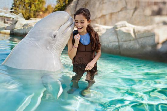 Be immersed in fun at Connecticut's world-class Mystic Aquarium, with its famous beluga whales.