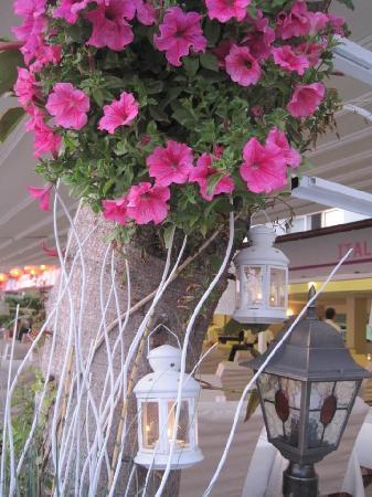 Kassaba Bar and Restaurant: flower