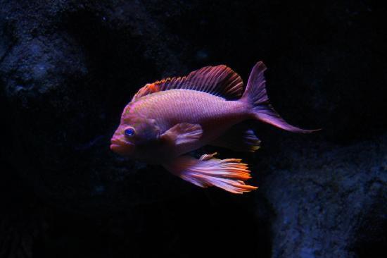 Aquarium Mare Nostrum: A fish