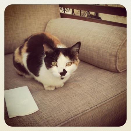 Sacred House: kitty