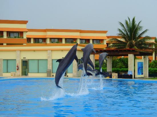 Grand Bahia Principe Tulum: Dolphins