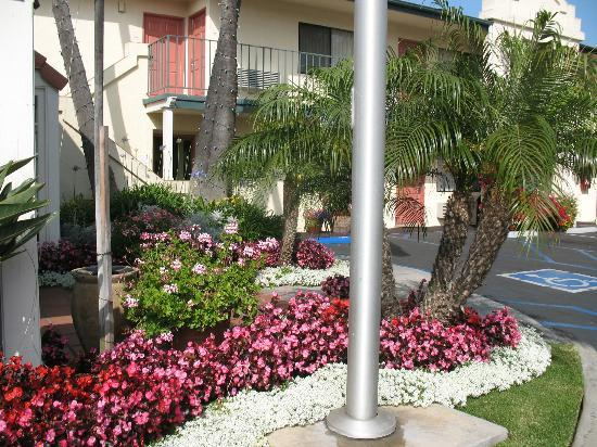 BEST WESTERN Lamplighter Inn & Suites at SDSU: Superb landscaping.