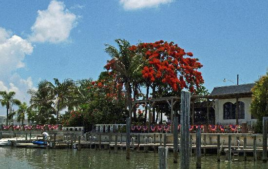 The Little Bar Marco Island Menu