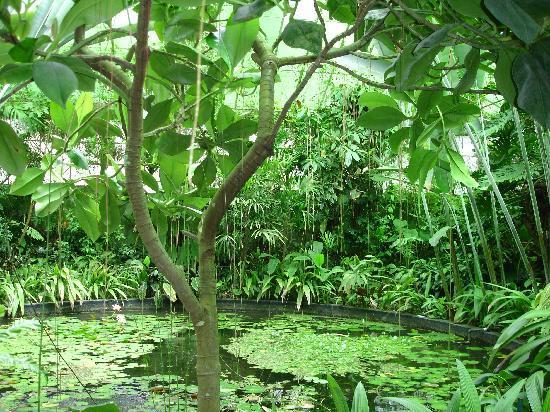 Jardín Botánico de Bogotá Jose Celestino Mutis: Bogota Botanical Garden: