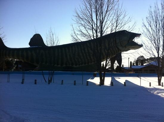 Fishing museum picture of fresh water fishing hall of for Freshwater fishing hall of fame