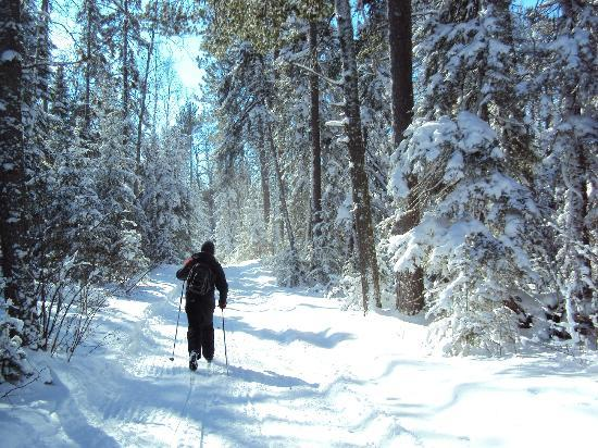 Bearskin Lodge : Skiing