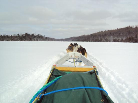 Bearskin Lodge : Dog Sledding